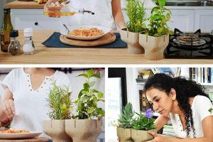 給植物一個「不塑」的家!Alphapot 把廚餘變成 100% 可分解盆栽