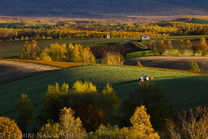 集資守護北海道美瑛的魅力風景!不再有下一棵「被推倒的樹」