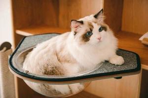 小空間大利用!CAT-KICK 活動式貓床、貓跳台,把現有家具變成貓的舒適天地