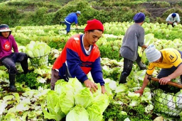 【眾力時代】打造真實版開心農場Cropital,Everett Ubiadas和他的農業夢