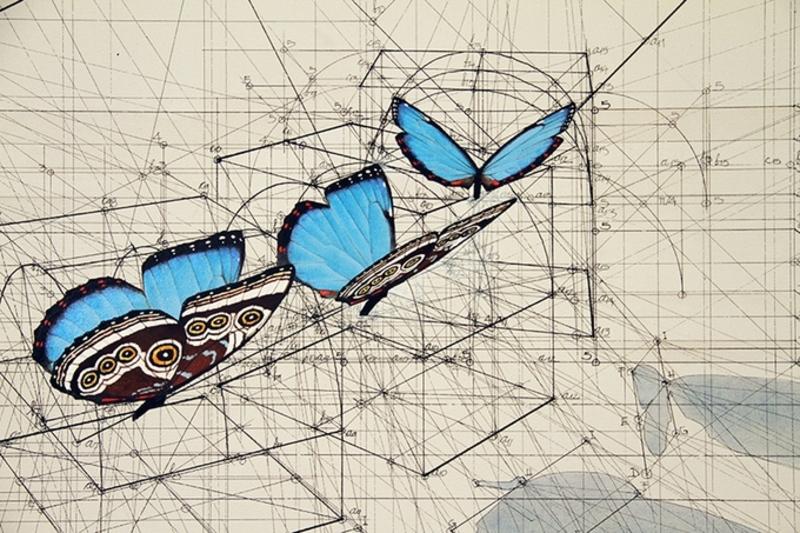 藍蝴蝶的起飛軌跡